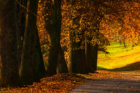 Fall landscape. Fall trees with golden foliage in the city October park, sunny fall nature scene. Glow effect applied