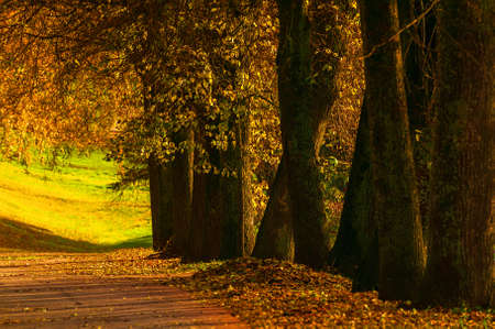 Autumn landscape. Autumn trees with golden foliage in the city October park, sunny autumn nature scene. Glow filter applied