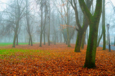 Autumn November landscape. Autumn in the city park. Bare trees and orange fallen leaves on the ground, autumn park scene