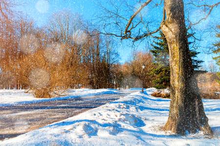 Winter landscape, winter park alley in sunny weather. Snowy winter park scene under light snowfall