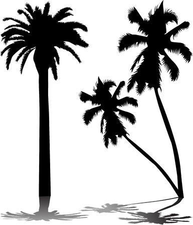 hot tour: Palm Tree
