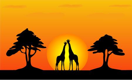 Giraffes - safari sunset - work with vectors - illustration