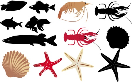 Fruits of seas Vector