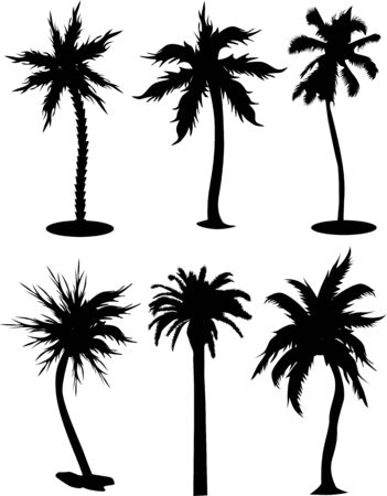 coconut palm: set of palm tree