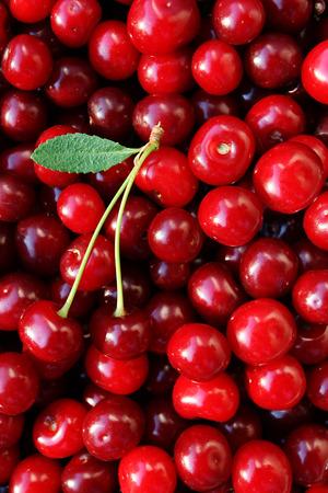cereza: cerezas maduras con una hoja sobre un fondo de cerezas