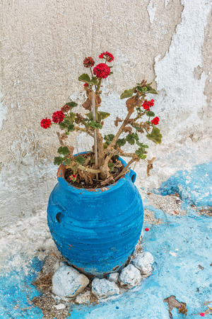 cyclades: Greek flower, Milos island, Greece, Cyclades