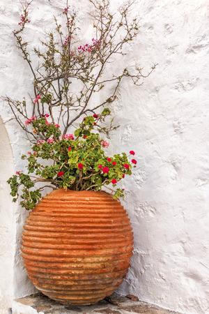flower pot: Greek flower, Milos island, Greece, Cyclades