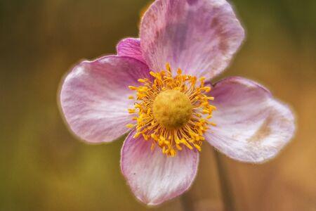 sch�ne blumen: beautiful flowers Lizenzfreie Bilder