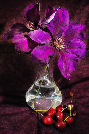 clematis flower: Purple clematis flower on a dark background with cherry