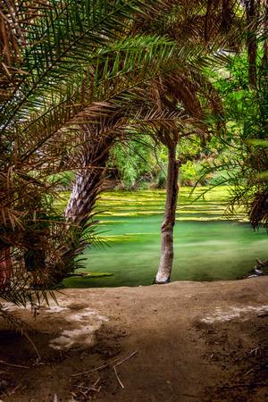 Preveli Beach with Palms park on Crete island, Greece.