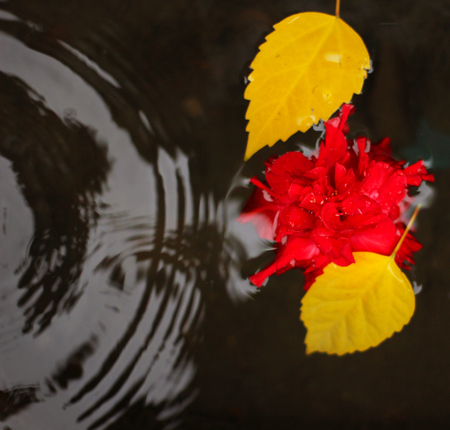A scene with a puddle and a flower Stock Photo