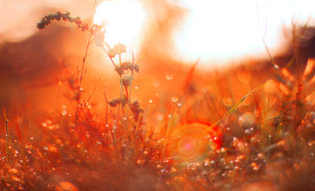 Field with early morning dew