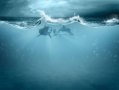 Water element in dolphin Stock Photo