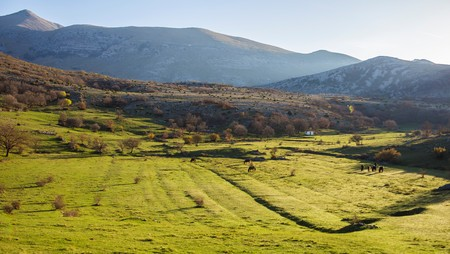 National park Paklenica, a part of Velebit; the largest mountain range in Croatia. Balkan mountains with forest, meadow and grazing horses. Photo taken in the morning; in the summer. Shot in Croatia.