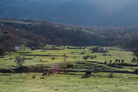 Landscape in the morning. Grazing cows and two running people. National park Paklenica, the part of Velebit; the largest mountain range in Croatia.