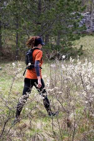 pinaceae: A woman hiker walking on a glade. National park Paklenica, the part of Velebit; the largest mountain range in Croatia.