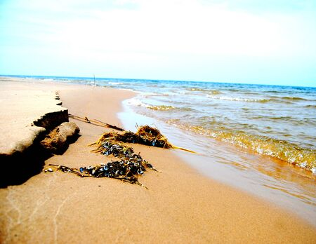 Some interesting vegetation washed up on the shore of Lake Michigan.