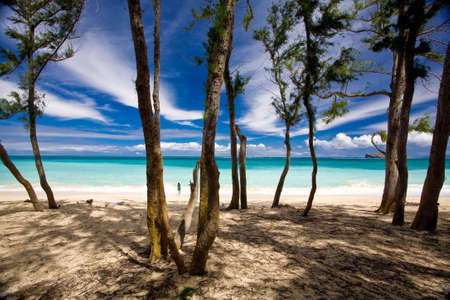 Shady trees forground this beautiful ocean scenic. Shot in Oahu, Hawaii. Stock Photo