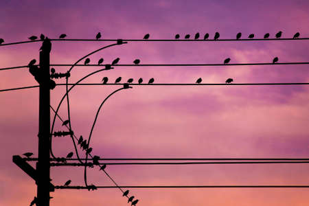 A flock of small birds are sitting on some powerlines at dusk.