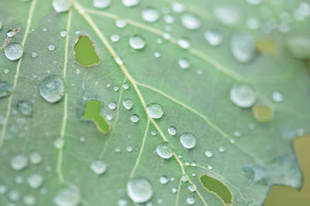 Close-up of waterdrops on a leaf. Stock Photo