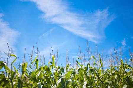 medium shot: Medium shot of a farmer