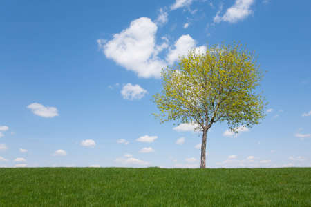 A single tree stands in a field against a blue sky