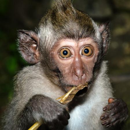 knock out: Something frightened little monkey
