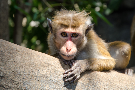 blinkers: Monkey sitting on a tree branch Stock Photo