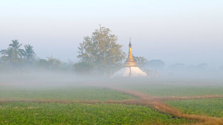 weald: Pagoda in the mist