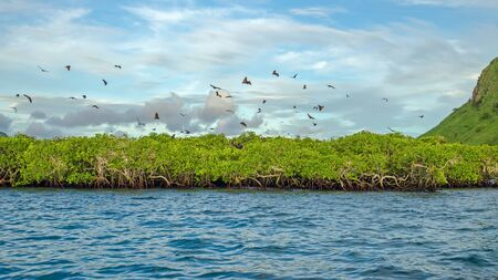 Flying foxes on the background of mangroves. Indonesia Komodo Banque d'images - 132113710