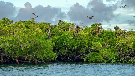 Flying foxes on the background of mangroves. Indonesia Komodo Banque d'images - 132113595