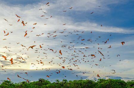 Flying foxes (flying bats) in the blue sky near Komodo Island