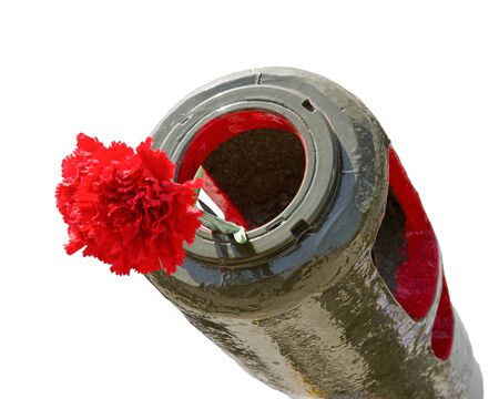 Red Carnation in the muzzle of the gun barrel in the memory of the events of World War II. Isolated on white