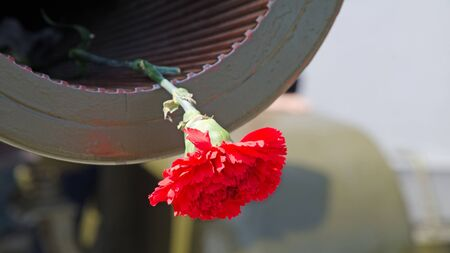 Red Carnation in the muzzle of the gun barrel in the memory of the events of World War II