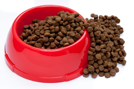pet food in red bowl photo
