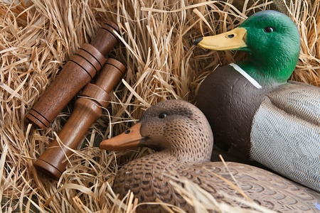 wildfowl: duck decoy with stuffed and some calls