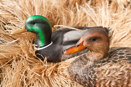 decoy: duck decoy with stuffed and some calls