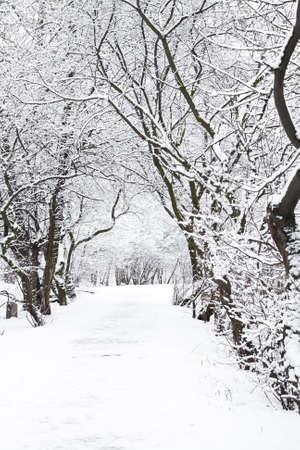 walk in a tree in snow  photo