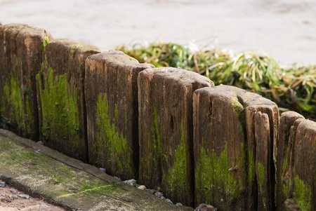 old wood plank with green scum and algae Stock Photo
