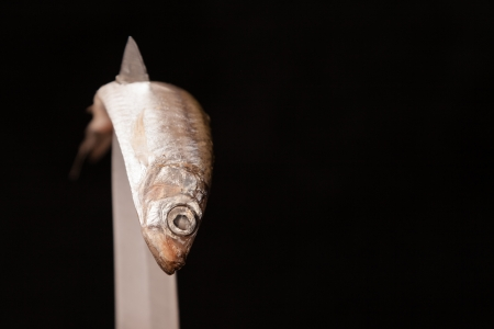 contorted: dead small fish contorted on blade of knife