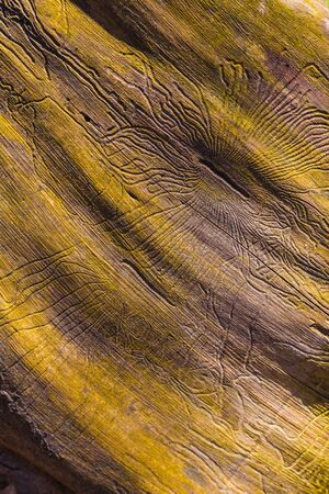 wormhole: closeup wormhole in wooden. abstract details with texture