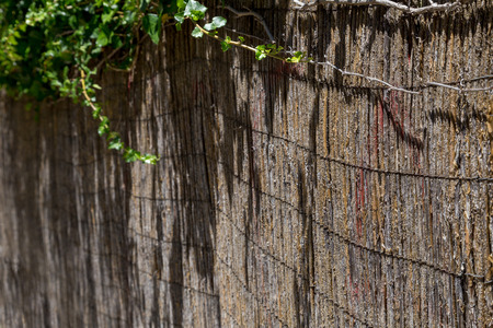 wall decor: street wall with plants and decor of bamboo