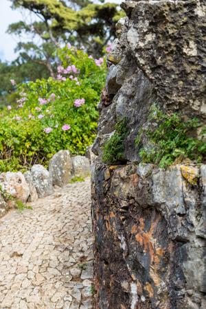 empedrado: calzada pavimentada carretera, gire en torno a la piedra con las flores