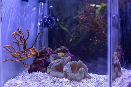 Small reef aquarium for inerior decoration with fish