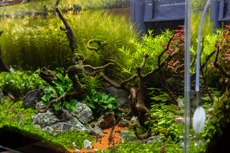 Small aquarium for inerior decoration with plants