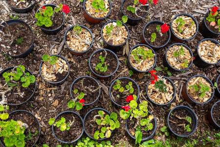 seedings of plants in pots for gardening, farming, agriculture Reklamní fotografie