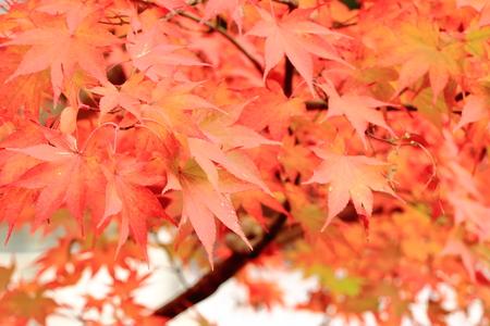 feuillage: Feuillage d'automne Banque d'images