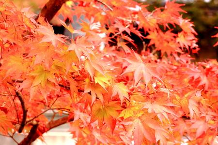 foliage: Autumn foliage