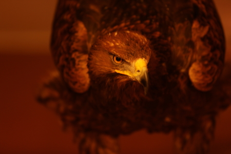 It is a picture of a sharp eagle. Stock Photo