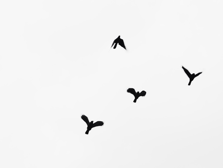 style: A silhouettes of birds flying in the sky
